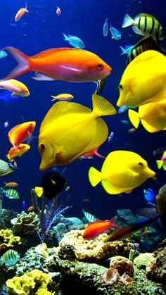 One day I want an aquarium like this. It calms me.