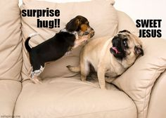 anim, beagl, funny dogs, silly dogs, funni, surpris hug, puppi, friend, pug