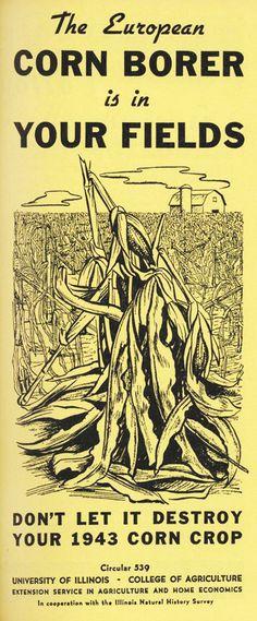 1942 Corn Borer Circular wwii food