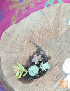 Blogger Shavonda Gardner planted succulents directly in a tree stump-turned-end table. || @Shavonda Shandray Gardner {AHomeFullOfColor}