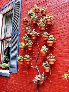 potted plants, hanging plants, garden trees, red wall, plant pot, flower pots, herbs garden, wall gardens, wall planters
