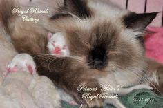 Kittens and Princess Halia