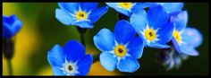blue flowers, nature, facebook timeline cover photo