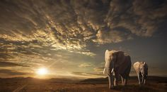 what do you think about Adventures on the Savannah? / 500px