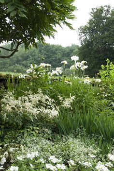 ♔  Iris ensata 'Great White Heron', Astilbe, Euphorbia 'Diamond Frost', Echinacea 'White Swan', Verbena Tucana White. White gatden
