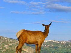 Milner Pass Trail - 8.2 miles, Poudre Lake Trailhead Rocky Mountain National Park Hiking