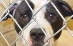 Allow Partners with Clayton County Animal Control (Partners for Pets) to continue to network, raise funds, and save the animals' lives.  PLEASE SIGN!