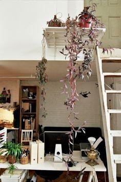 the plant shelf