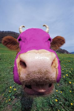 """Moo! My favorite poem as a kid was """"I never saw a purple cow, I hope to never see one. But I can tell you anyhow, I'd rather see than be one!"""""""