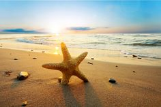 Starfish at sunset Wall Mural
