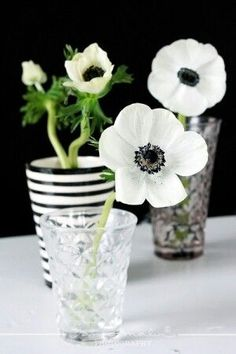 Black and white Beautiful gorgeous pretty flowers