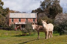 Red Brick Barn House -- It may look like it was built over a century ago but this brick barn on the outskirts of Castlemaine is only three years old. Here, pet donkeys Ki Ki and Dou Dou in the backyard paddock.