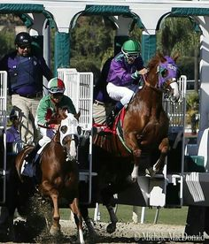 California Chrome leaving the gate - by Michelle MacDonald