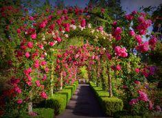 butchart garden, roses, summer rose, gardens, rose garden, place, flower