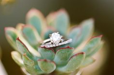 ring pic with succulents