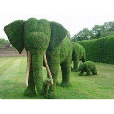 Elephant topiaries