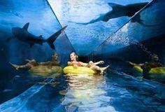 water slides, atlantis resort bahamas, the bahamas, leap of faith, atlantis bahamas, place, water parks, shark tank, atlanti resort