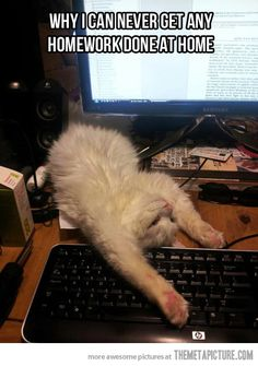 I love this funny sleeping cat, find more funny cat stuff here http://www.funnycatsblog.com #funnycat #funnycats #cats