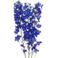 bulk flower, blue delphinium, stem 108, blues, 100 stem