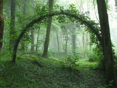 wood, nature, tree, green, arches