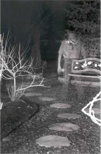 Bing : Real Ghost Photos