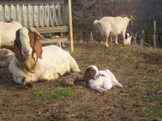 Oh...we could make lots and lots of goats milk soap!