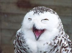 thk:  happy owl