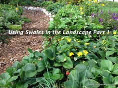Using Swales in the Landscape Part 1