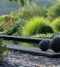 & water + grasses