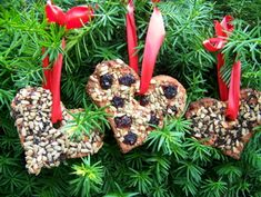 Christmas | make these edible ornaments for the birds, hang them on your tree for a natural touch, then, when Christmas is over, enjoy hanging them out for the birds in January!