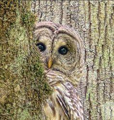 owl.  I love it!