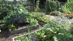 Backyard Garden Ideas Vegetables | ... Design | Planting Vegetables - backyard vegetable garden design ideas