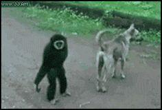 What a little monkey!