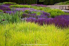 moor grass, landscap, color combo, park, autumn, ornamental grasses, luri garden, meadow sage, plant combin