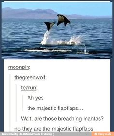 The majestic flap flaps...