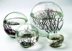 """Eco-Sphere  """"Inside these sealed glass balls live shrimp, algae, and bacteria, all swimming around in filtered seawater. Put it somewhere with some light, and this little ecosystem will chug along happily for years, no feeding or cleaning necessary, totally oblivious to the fact that the rest of the world exists outside."""""""