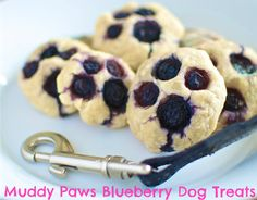 Muddy Paws Blueberry Dog Treats. 1 cup water, 2 eggs, 2 teaspoons honey, 2 cups flour, 1½ cups blueberries.