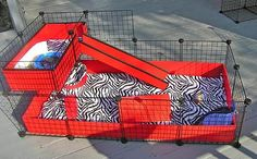 red and zebra C guinea pig cage