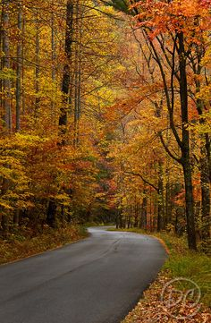 Road to Bald River Falls  Cherokee National Forest