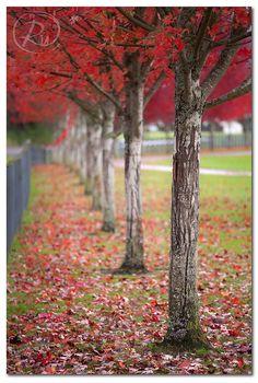 Fall is my favorite season.