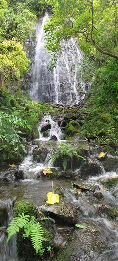 Rainforest windward O'ahu, Hawaii
