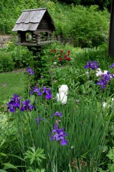 Welcome to Day 3 in Beths Zakraseks garden in Cedar Rapids, Iowa. Continuing her story once again, she says, I use absolutely no pesticides in my gardens. I rarely find insect damage, not even... purpl iris, iowa, birdhous, cedar rapid, yard, gardens, garden idea, beth garden, bird hous