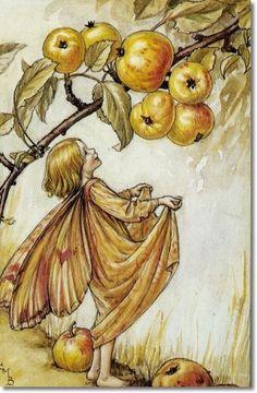 Cicely Mary Barker - Flower Fairies of the Autumn - The Crab-Apple Fairy