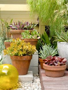 Low Maintenance plants for the backyard from bhg.com          With any outdoor room, choose plants that have an undemanding nature so you can spend more of your time relaxing. The potted succulents that surround this space are drought-tolerant and need to be watered only once a month.
