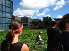 Why Conservatives Should Care About Urban Farming