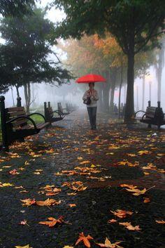 rainy autumn walk