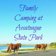 Family Camping at Assateague State Park. #beachcamping #camping #Assateague #assateaguestatepark