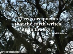 """Trees are poems that the earth writes upon the sky."" Kahlil Gibran"