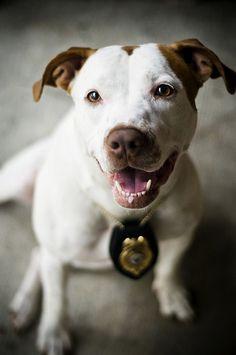 police #pitbull #pup