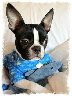 Smiley Shark Dog Pajamas